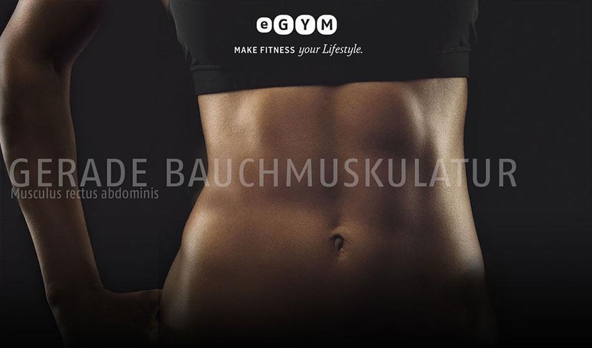 Gerade Bauchmuskulatur